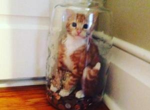 Воронежский кот попал в стеклянную ловушку из-за своей жадности