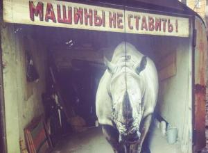 Огромный носорог просит воронежцев не быть автохамами