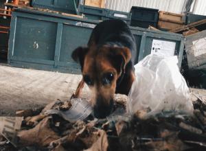 В Воронеже отметили самое высокое в области количество заболевания бешенством животных