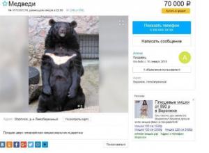 В Воронеже на продажу через Avito выставили гималайских медведей