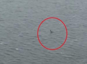 Загадочное чудовище в Воронежском водохранилище сняли на видео