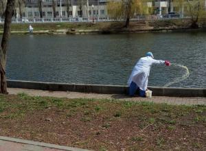 Воронежцев перепугал сброс неизвестной жидкости в Лебединое озеро