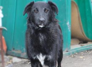 Воронежцев просят отдавать старые вещи в ветеринарный госпиталь