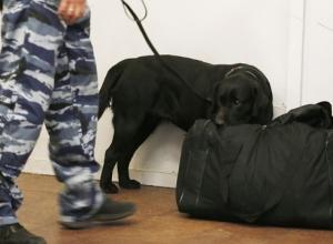 Спецслужбы эвакуировали посетителей воронежского ТЦ из-за подозрительной сумки