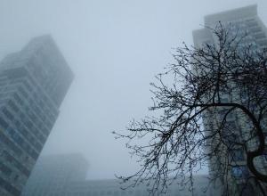 Воронеж из-за погоды назвали «раем для ежика»