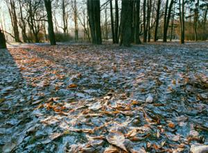 На рабочей неделе воронежцев ждет резкое похолодание