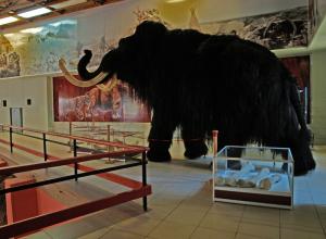 Воронежский музей «Костенки» приглашает на открытие сезона под рев мамонта