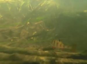 Подводный мир воронежской реки показали на видео