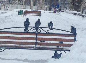 Банда голубей прогнала старушек со скамейки в Воронеже