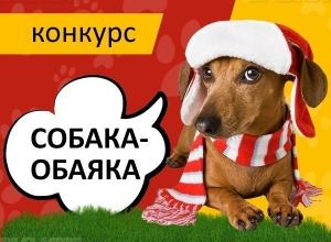 Определены победители конкурса «Собака-обаяка»