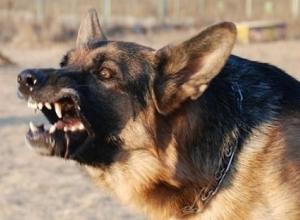 Воронежский полицейский пристрелил агрессивную овчарку