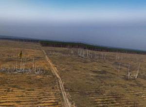 Воронежцы смогут принять участие в озеленении области