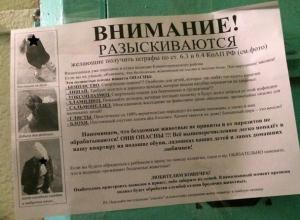 Кормление бездомных кошек развязало соседскую войну в Воронеже