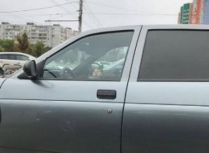 Кота застали за рулем автомобиля на парковке в Воронеже