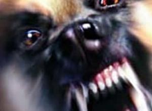 Воронежцев предупредили о собаке алкашей, которая кидается на прохожих