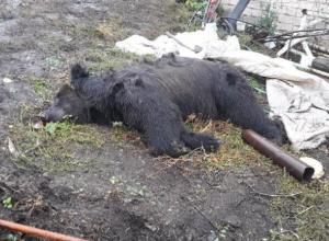 Владелец медведя-убийцы обвинил в произошедшей трагедии погибшего ветерана