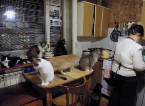 Владелица приюта для животных в Воронеже: «Я с кошками живу за счёт денег, отложенных на памятник покойному мужу»