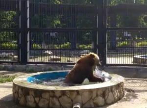 Озорное плескание медведицы под Примадонну попало на видео в Воронеже
