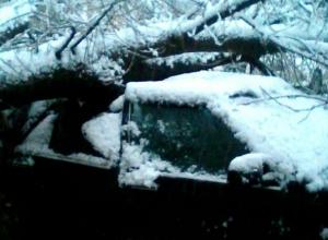 Заснеженные деревья придавили машины воронежцев