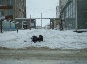 Странные утехи мужчин в сугробе сфотографировали в Воронеже