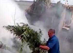 Уничтожение 20 тонн конопли под Воронежем попало на видео