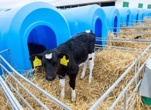 В воронежской Бабке откроют молочный комплекс на 1,5 тыс голов скота