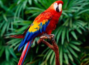 В Воронежском зоопарке имени Попова усыпят всех птиц из-за опасного вируса