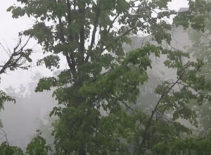 Начало рабочей недели в Воронеже начнется с обильных тропических ливней