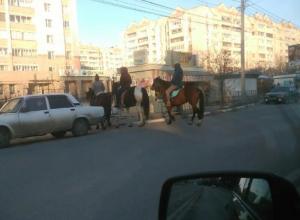 «Три богатыря» на лошадях привлекли внимание воронежцев