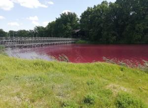 Кровавое озеро в Грибановке воронежец объяснил менструацией у карасей