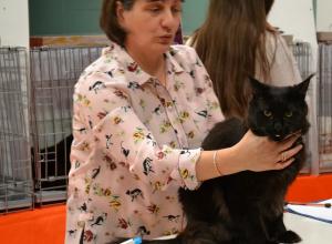 На выставке в Воронеже продавали котов по странной схеме