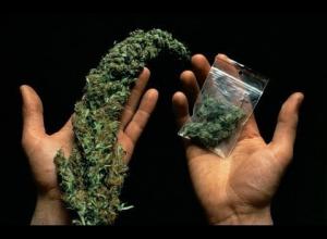 Инвалид-колясочник продал полицейскому марихуану в Воронежской области