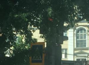 «Умный» светофор на Плехановской стыдливо спрятался от взглядов воронежцев