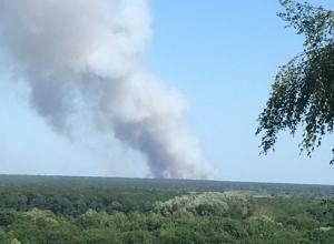 Аномальная жара привела к возгоранию леса под Воронежем