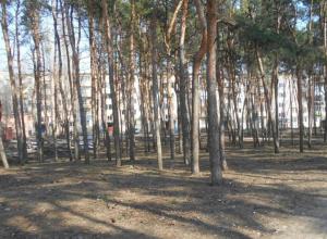 В Воронеже привели в порядок загаженный сквер на Молодогвардейцев