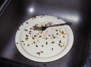 В воронежском кафе «Моне» были обнаружены тараканы
