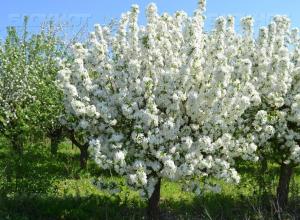 Делу о хищении яблоневого сада Воронежа остался один шаг до суда