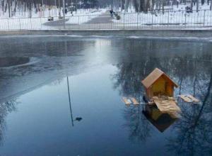 Воронежцы подарили уточке из Центрального парка «однокомнатную квартиру»
