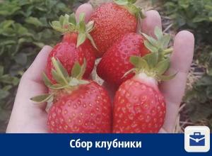 Воронежцев зовут на сезонную работу