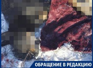 В центре воронежского поселка цинично расстреляли собак