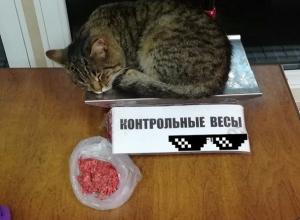 Спящий рядом с фаршем в магазине кот испугал воронежцев