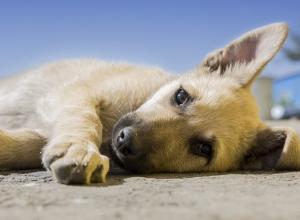 Поиском живодёров, отрезавших голову бездомному щенку, займутся воронежские экологи