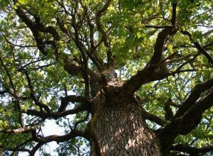 В этом году в Воронеже посадят 4 тысячи деревьев и 12 тысяч кустарников