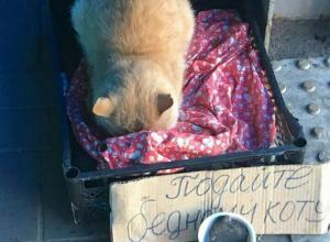 Кот, выпрашивающий деньги в переходе, возмутил воронежцев