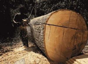Воронежцев могут посадить на пять лет за спиленные деревья на отопление