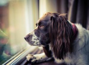 В Воронеже мужчина выбросил собаку из окна 8 этажа
