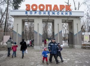 В Воронежском зоопарке енот, кролик и еж предскажут весну