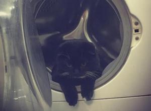 Воронежский кот-космонавт готовится к полету в стиральной машине