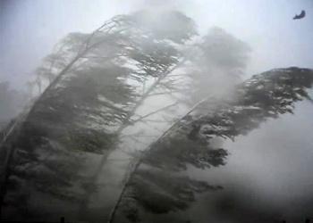 Спасатели предупредили о надвигающемся на Воронеж урагане