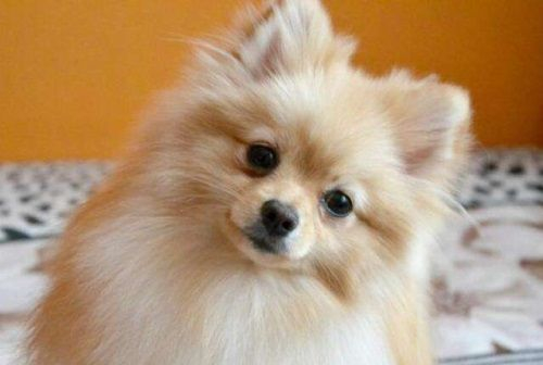 Названы самые известные породы собак вВоронеже